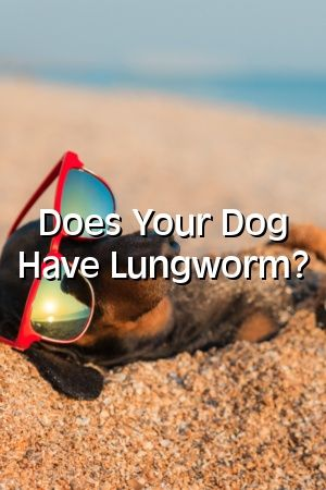 Nicola King Tells About Does Your Dog Have Lungworm? #dogs#dogcat#homedog#dogcute#dogs#dogsandpuppies#diypetideasdog#diypet#petstuff