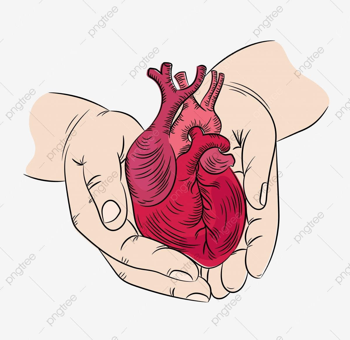 Heart And Hands Health Symbol Medicine Human Hand Draw Vector Illustration Print Set Anatomic Heart Hand Png And Vector With Transparent Background For Free In 2021 Hand Drawn Vector Illustrations
