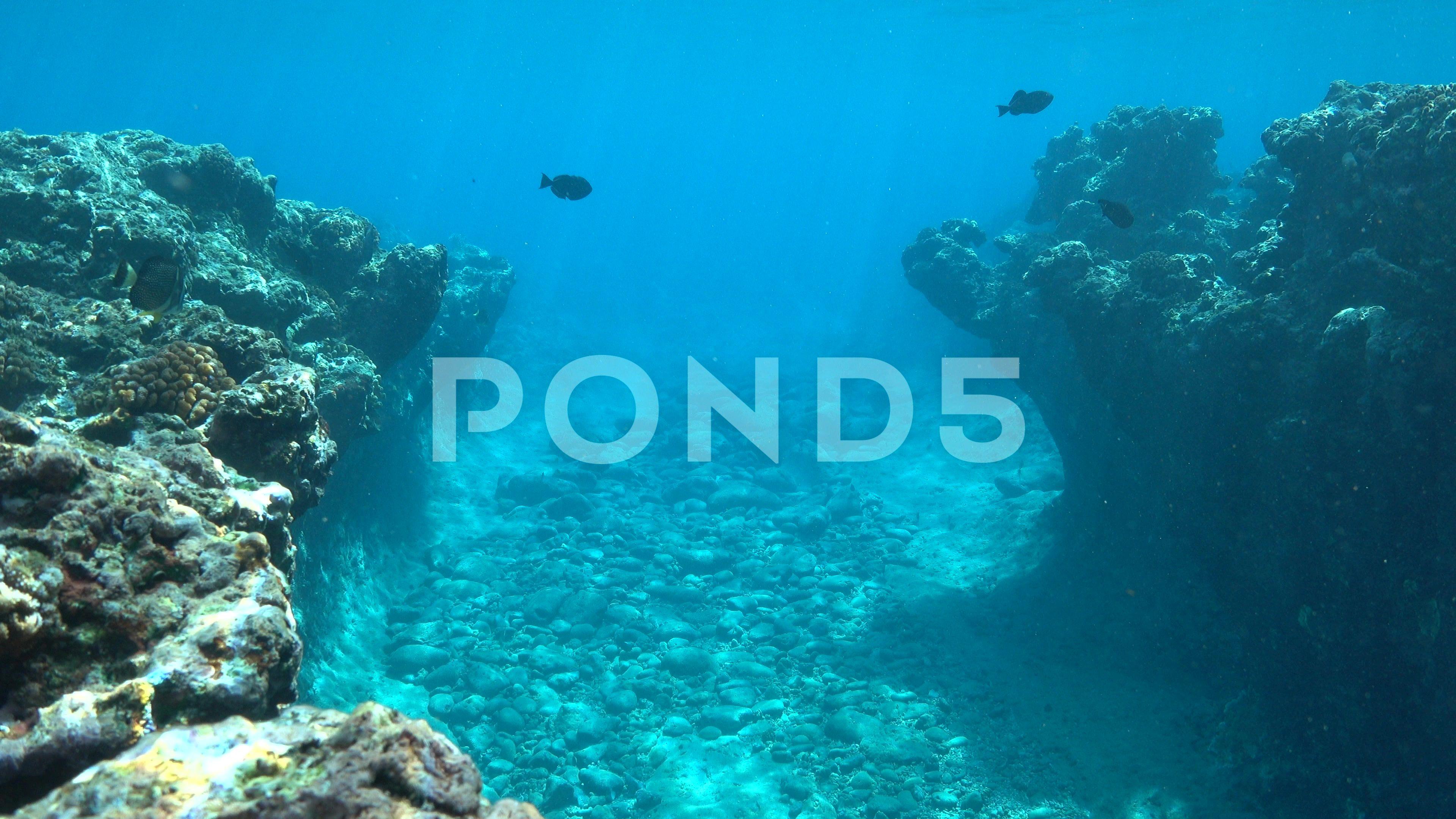 Underwater Landscape Rocky Ocean Floor Pacific Stock Footage Rocky Ocean Underwater Landscape Ocean Underwater Underwater Landscape