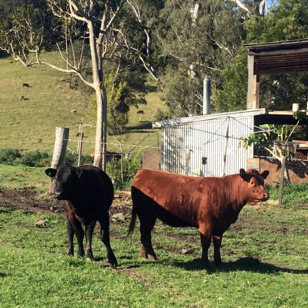 buy hand sourced pasture raised beef direct from the farmer