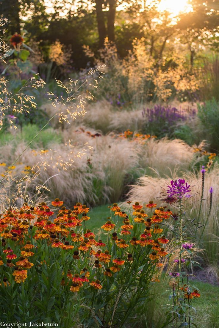 Jaap de Vries - Jacobstuin | Meadow + Prairie Gardening | Pinterest ...