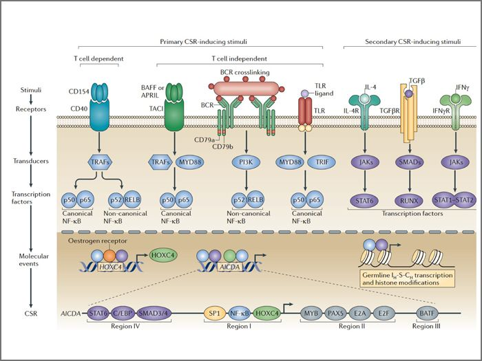 Pattern Recognition Receptors Pattern Recognition Immunology