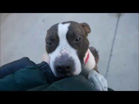BROOKLYN A1069331 Help us Save NYC AC&C Shelter Dogs