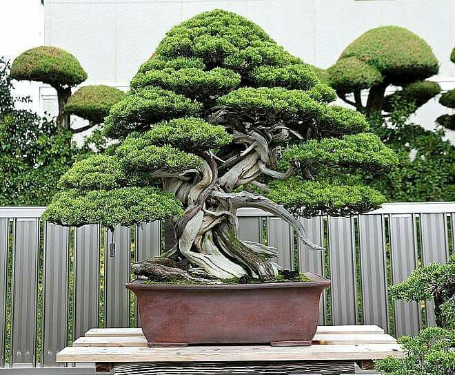 Pin By Bagus Wijaya On Bonsaiinsp2 Bonsai Bonsai Art Bonsai Styles