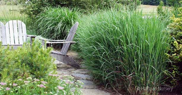 bordure d 39 all e en gramin es hautes jardin naturel herb garden paste pinterest gramin es. Black Bedroom Furniture Sets. Home Design Ideas