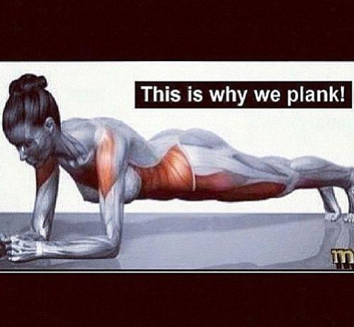 플랭크 동작에서 사용되는 근육