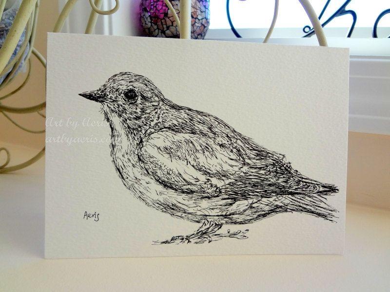 Eastern Bluebird Bird Ink Pen Drawing 5 X 7 Black White If