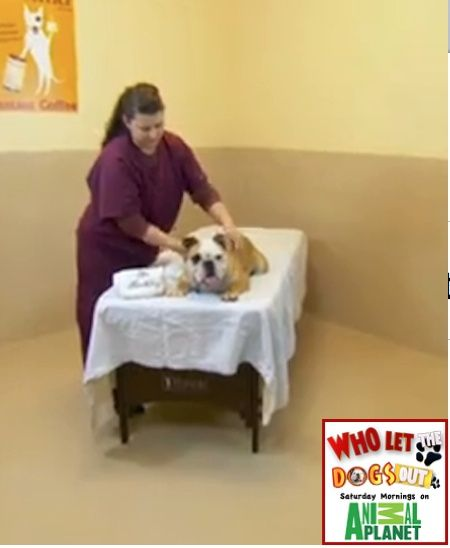 Wally gets a massage at the dog spa who let the dogs out tv show wally gets a massage at the dog spa who let the dogs out tv show solutioingenieria Choice Image