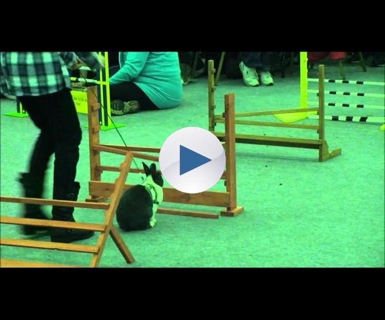 Run Rabbit..or, Jump Rabbit!