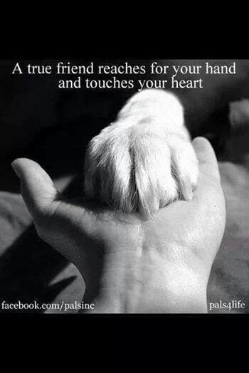 Pin By Franzi Ska On Animals Pinterest Animal Creatures And Dog