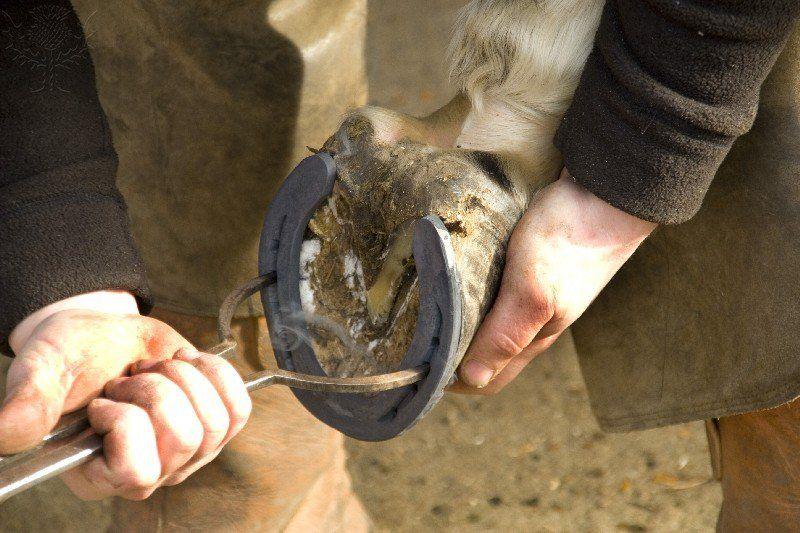 العثور على البيطار Farrier Horse Love Horses