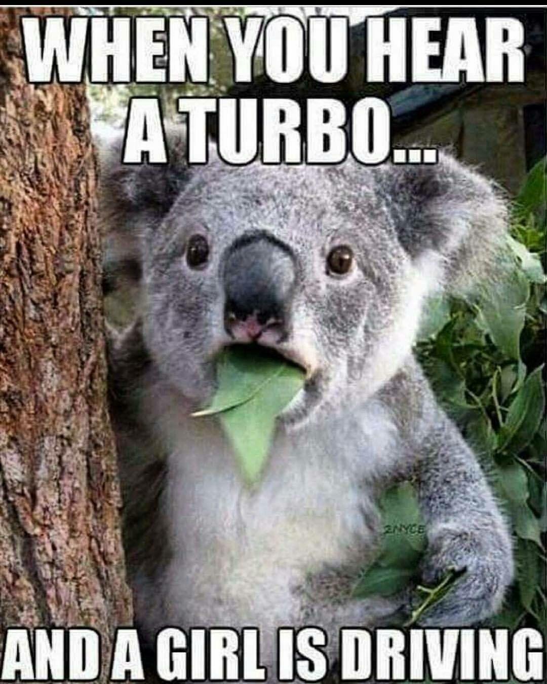 Pin by Crystal Newman on Car Memes | Funny koala, Funny ...  Funny Koala Memes