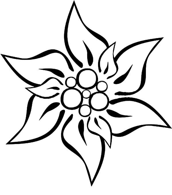 Coloriage Fleur Edelweiss.Edelweiss Flower Coloring Page Google Search Info Cess Hirsch