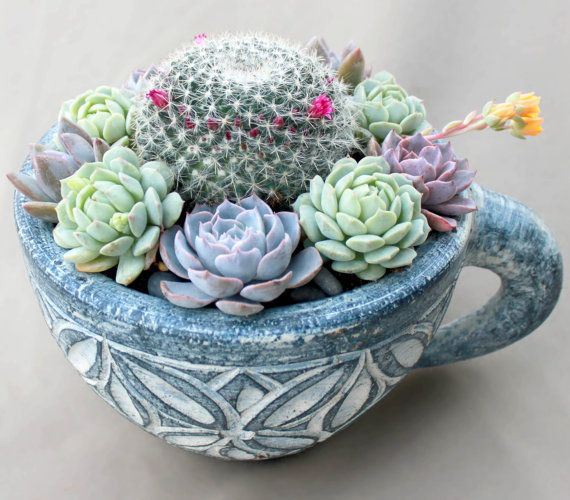Mother S Day Container Garden Ideas: Beautiful Unique Mother's Day Gift! Colorful Succulent