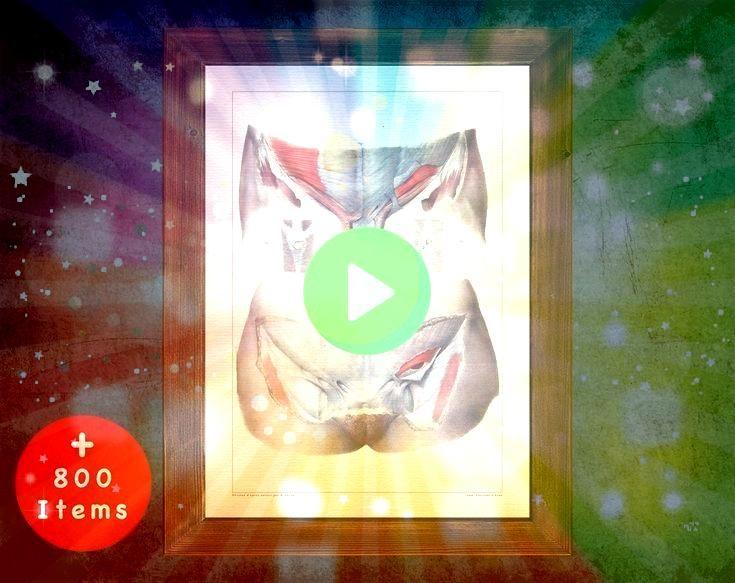 art ILIO INGUINAL NERVE medical student gift Gynecologist and Gynecol Anatomy art ILIO INGUINAL NERVE medical student gift Gynecologist and Gynecol Anatomy art ILIO INGUI...