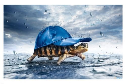 Funny 3d Animal Turtle Wallpapers Hd: TURTLE Shell In BASEBALL Cap WALKING In The Rain POSTER