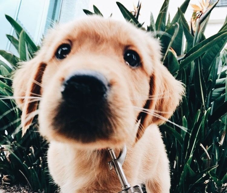 Pin By Claire Carson On A N I M A L I A Pinterest Puppies Cute