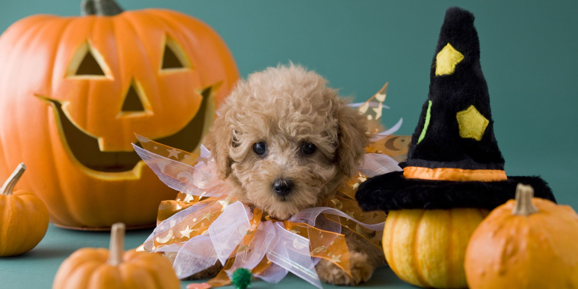 Top Wallpaper Halloween Puppy - de78526b5b6a71c0b804bb8081bd06ba  Picture_744743.jpg