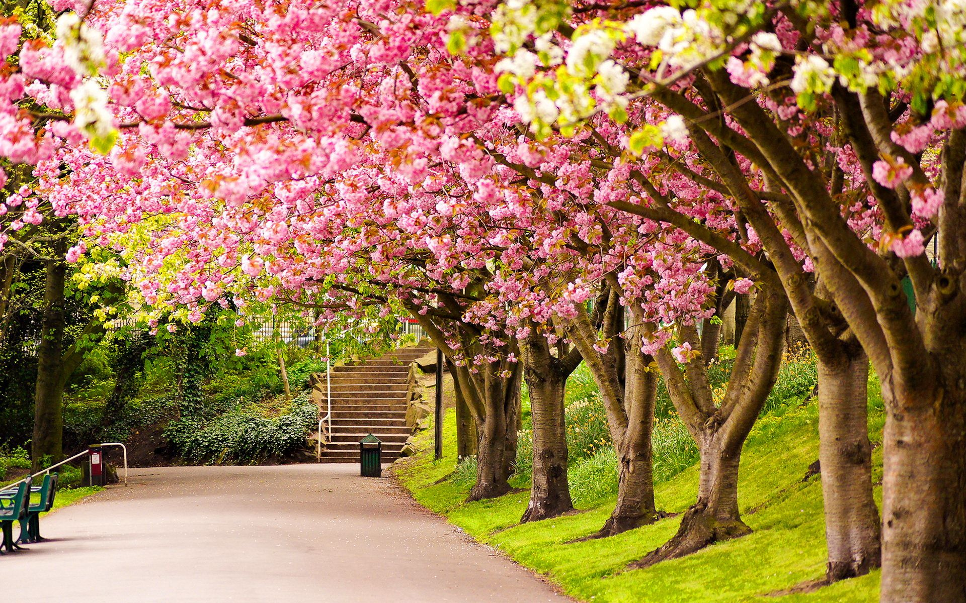 Spring Park Wide Desktop Background Wallpaper Free Spring
