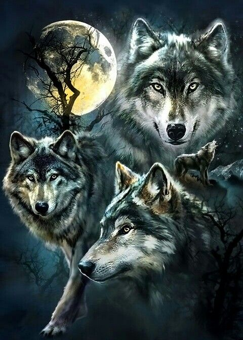 89ffdc5e8504 Collage of wolves at night
