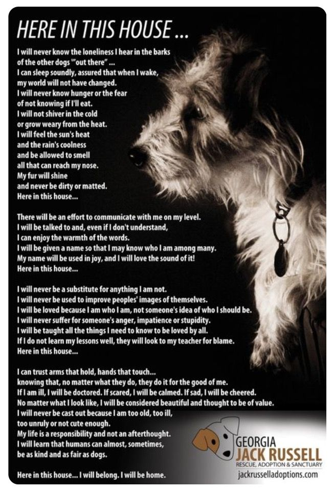 Pin by Carol Valeri on For the love of a dog. Dog poems