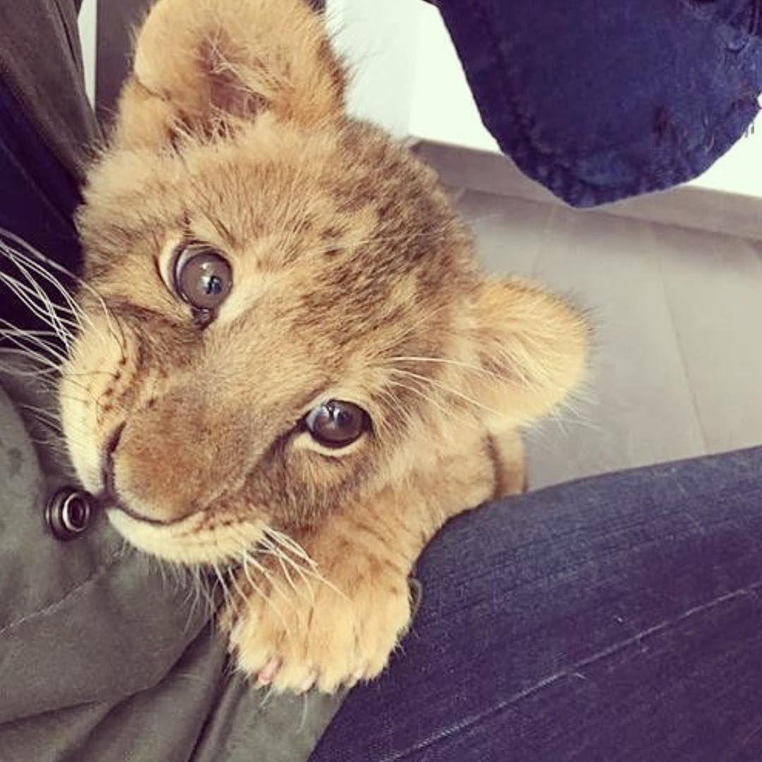 Baby animals instagram - Inspiration For All Girls Inspoforallgirls Fotos E V Deos Do Instagram Baby Lionsadorable Baby Animalslion