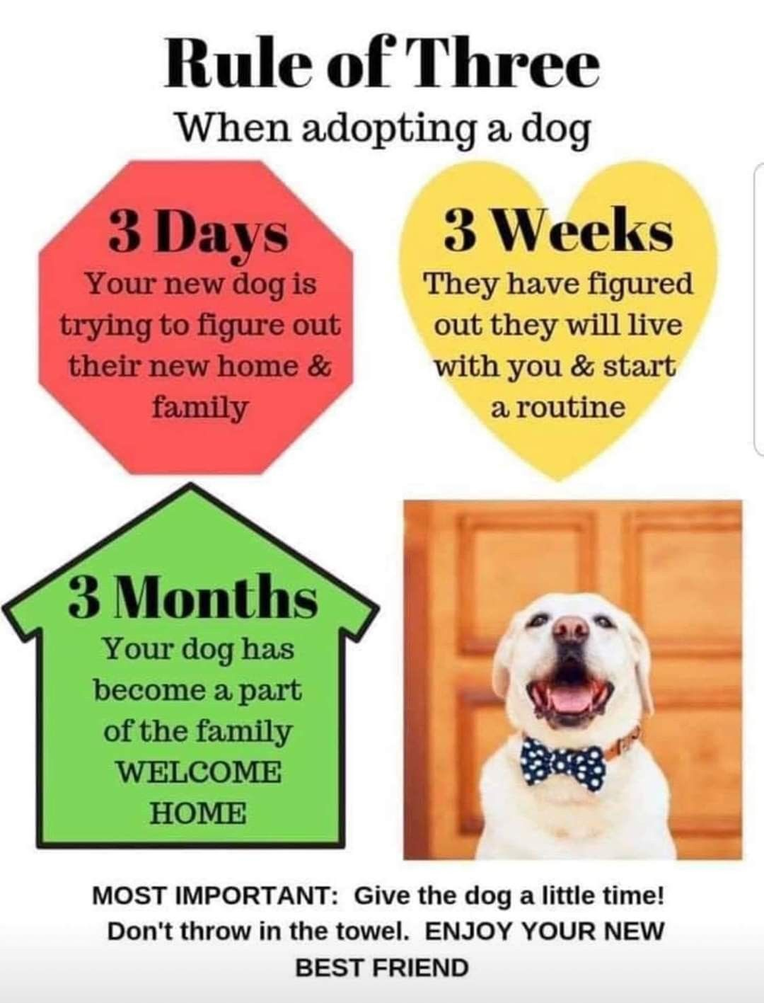 Pin By M A R I O L I N A On Poochies Dog Adoption Shelter Dogs Adoption Rule Of Three