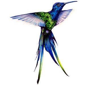 Watercolor Print Long Tail Hummingbird Nectar Feather Birds Home Decoration