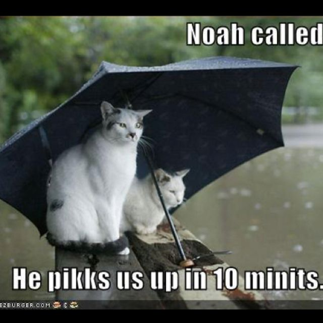 Funny Quotes Rainy Days | Funny Inspirational Quotes