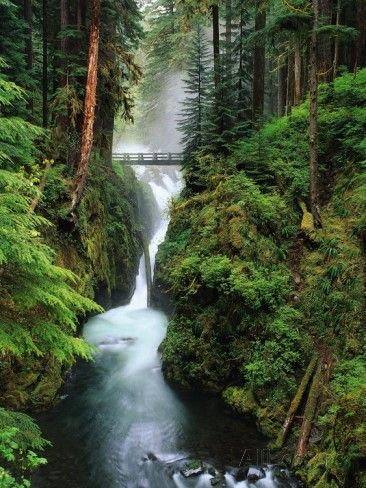 Sol Duc Falls Cascading Through Rainforest Photographic Print by Mark Karrass at AllPosters.com