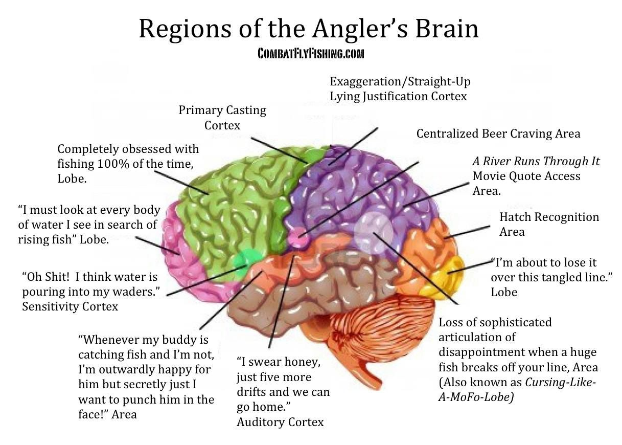 Fish Brain Diagram