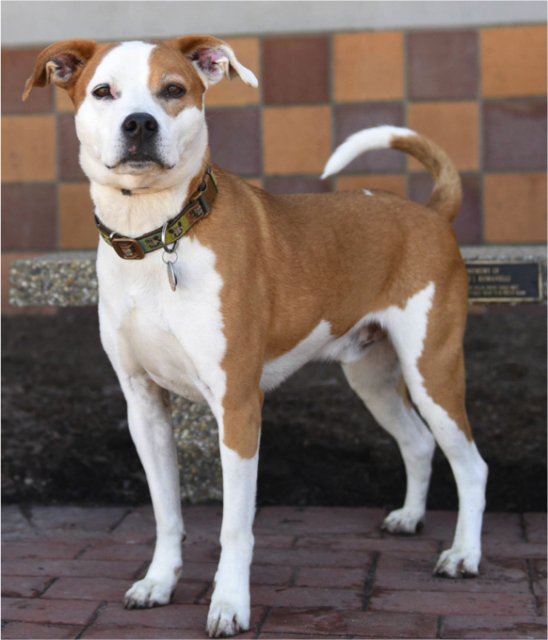 This dog needs a home! Go to Newsday com/pets to view a full list of