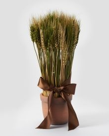Potted Wheat Bundle 17""
