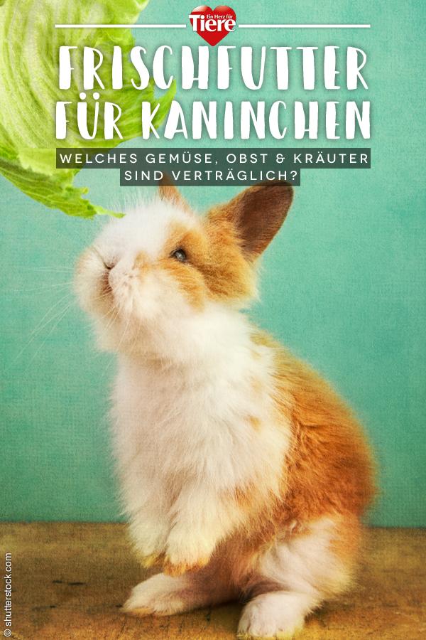 Frischfutter für Kaninchen: Listen mit Obst, Gemüse und Kräutern