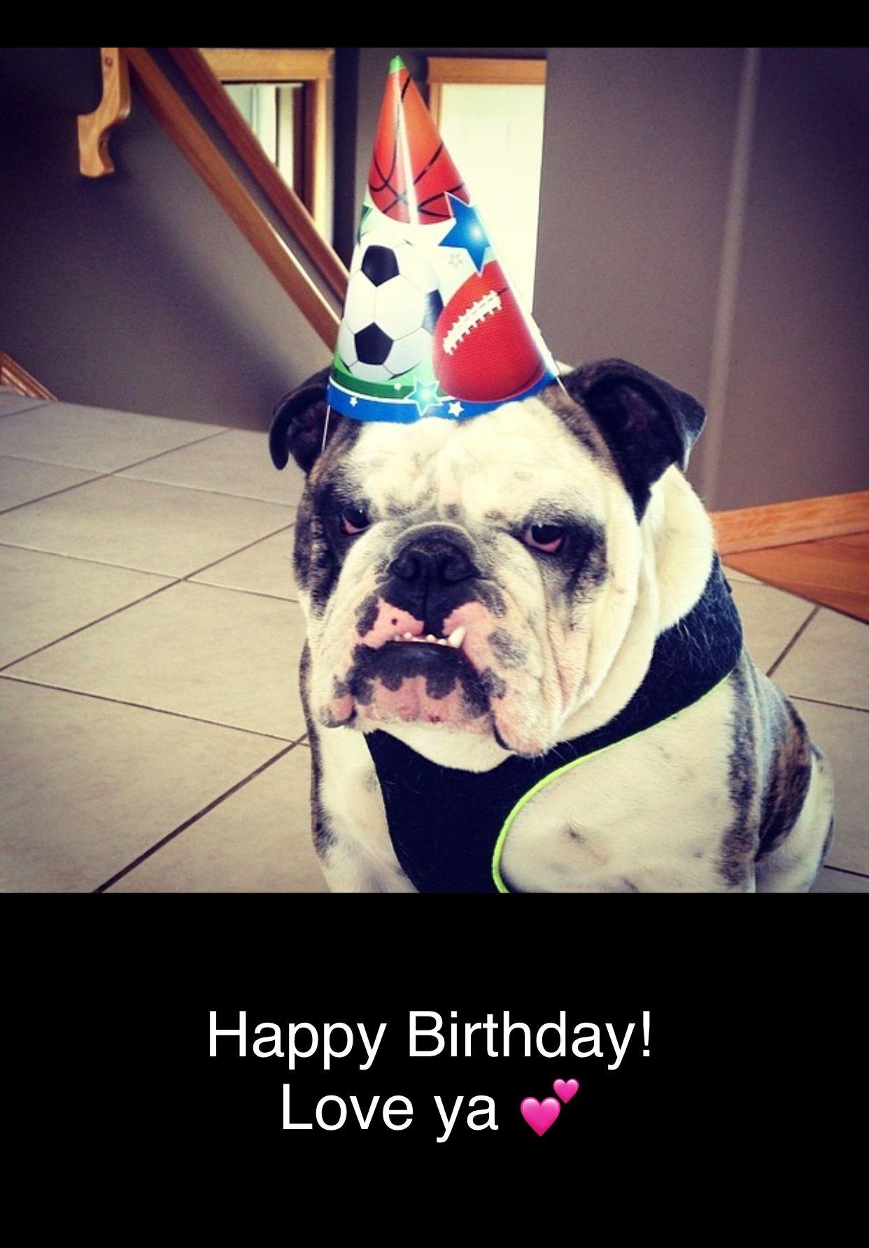 Pin By Candice May Martin On Birthday Memes Birthday Meme Happy Birthday French Bulldog