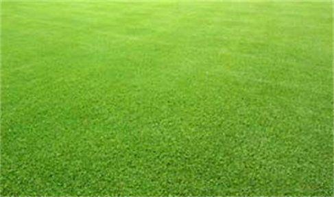 how to make bermuda grass dark green
