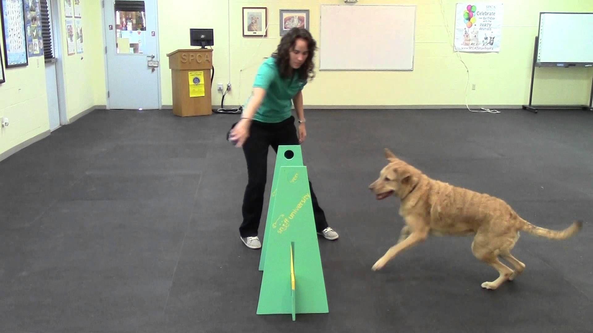 Super Duper Flyball Training Video Dog Training Outdoor Dog