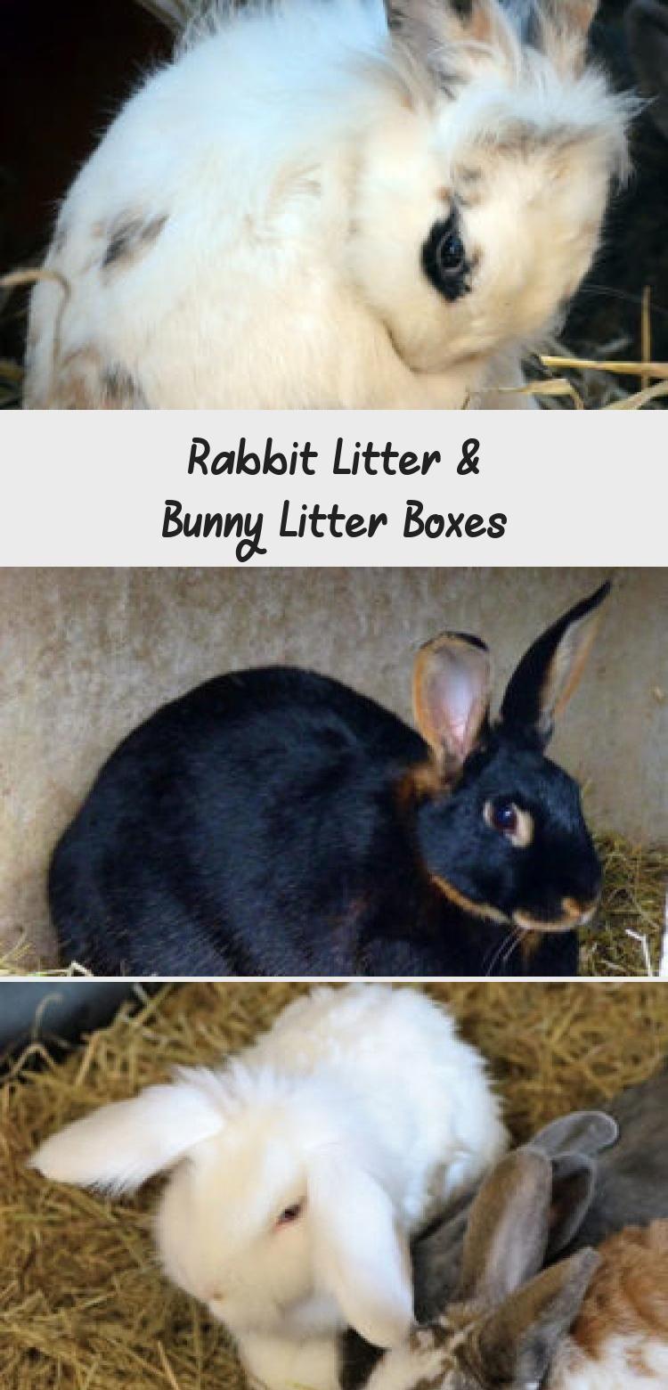 Rabbit Litter Bunny Litter Boxes Rabbit Litter Bunny Litter Box Litter Box