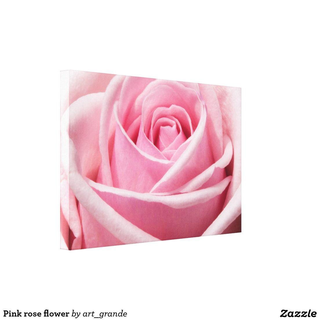 Pink rose flower canvas print
