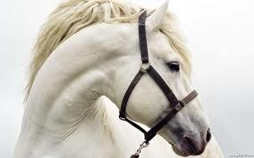of all the animals ive ever wanted a white horse is on top of my list.