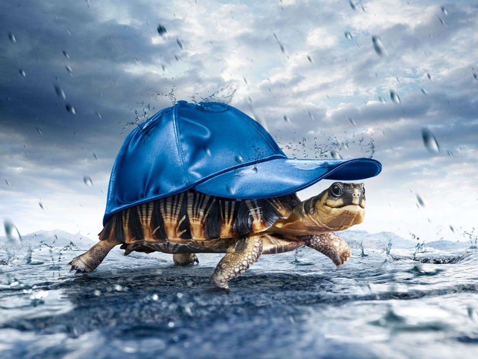 Funny 3d Animal Turtle Wallpapers Hd: Rain Wallpapers, Happy Turtle