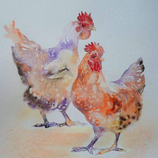 Chicken Duo Chicken Art Chicken Painting Watercolor Bird