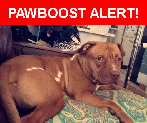 Please Spread The Word Josie Was Last Seen In Minneapolis Mn 55412 Nearest Address Near Aldrich Ave N 40th Ave N Lost Pets Losing A Pet Dogs Pets