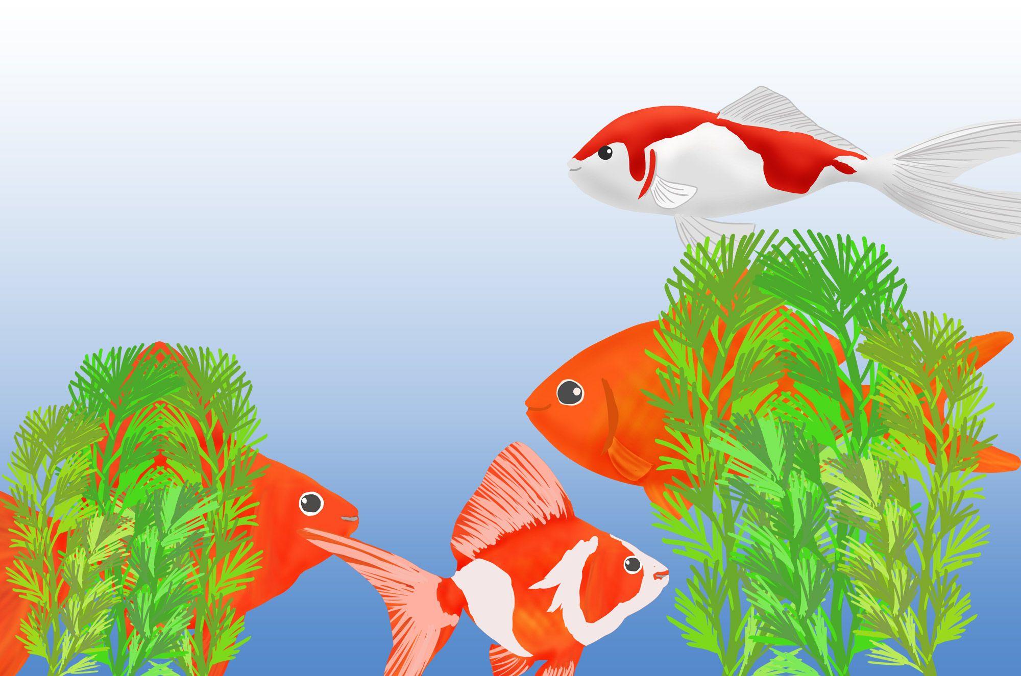 金魚イラスト:可愛い金魚のイラストと水草と金魚鉢のフリー素材集