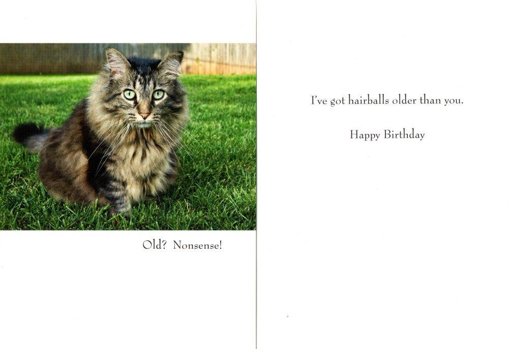 Cat Toys Best Funny 40 Animal Birthday Cards With Cats Jg