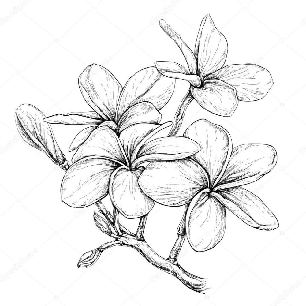 20++ Fleur de frangipanier dessin tatouage ideas