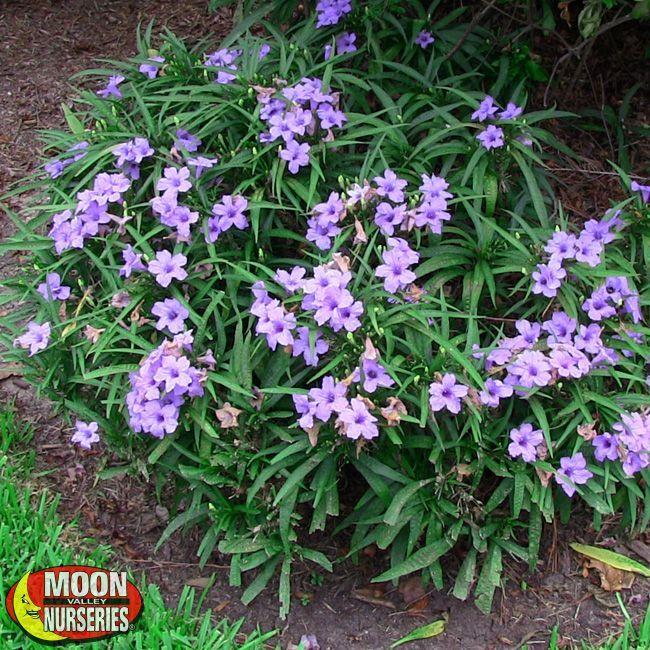 Plants, Backyard Plants, Ground Cover Plants