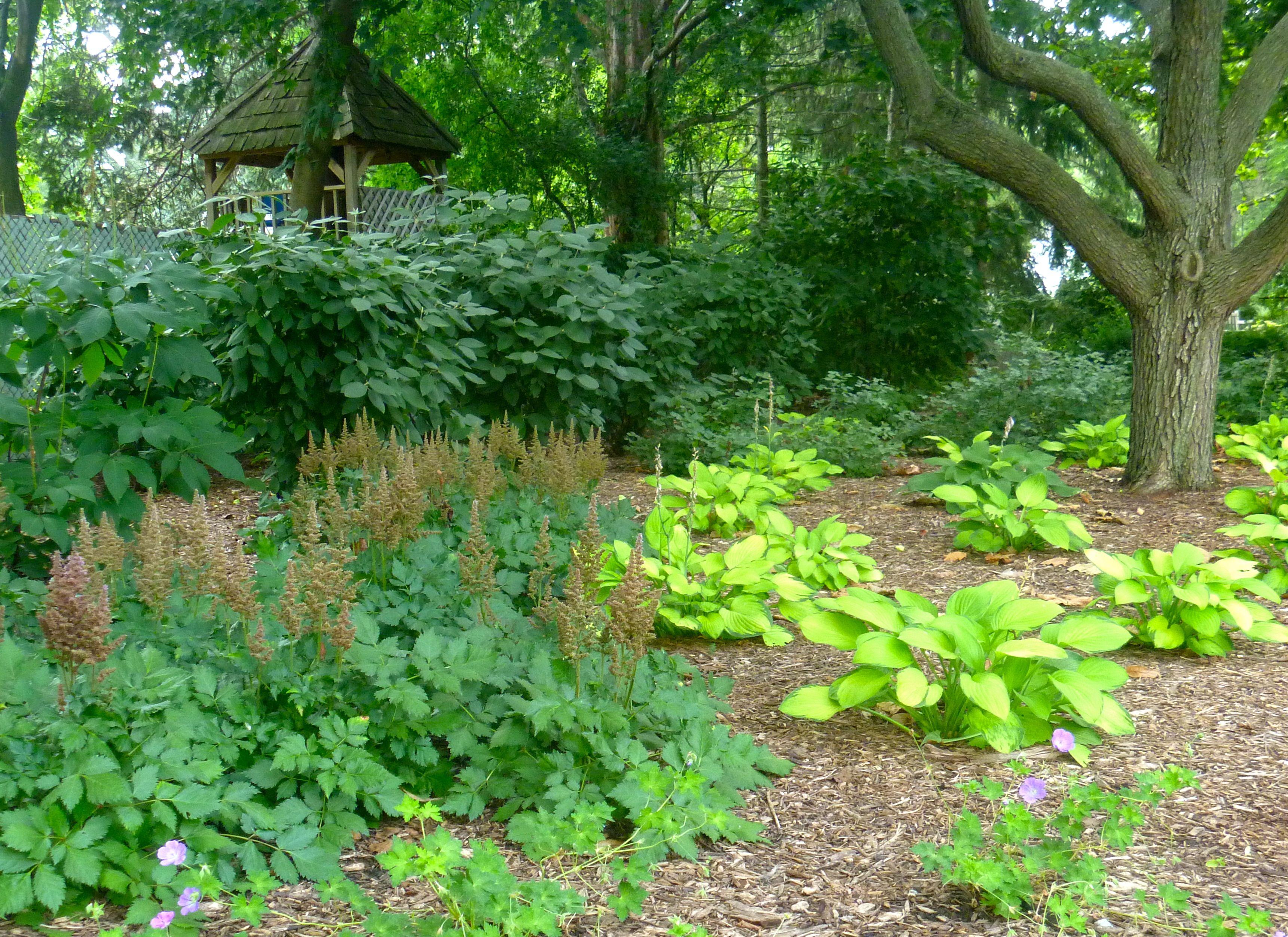 Shade garden, hosta and astilbe. Lombard, IL | Land Art Design ... on hosta and daylily garden, hosta and hydrangea garden, hosta and caladium garden, hosta garden plans blueprints,