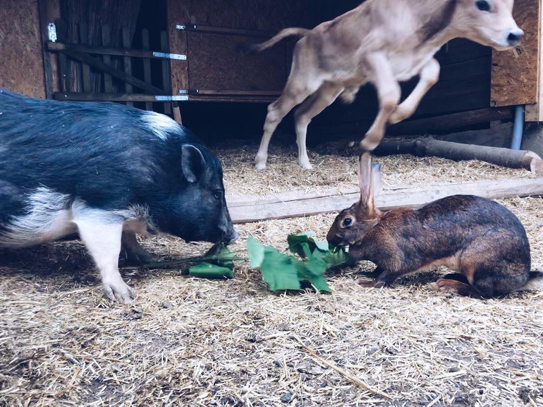 Lebenshof In 2020 Tiere In Not Tiere Rehkitz