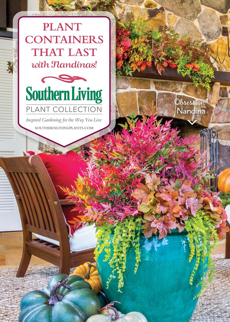 Plant Containers That Last With Southern Living Plant Collection Nandinas!